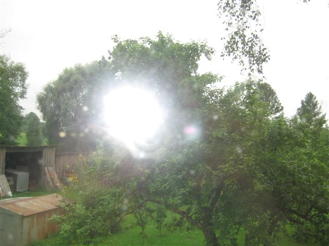 Lillen omenapuu